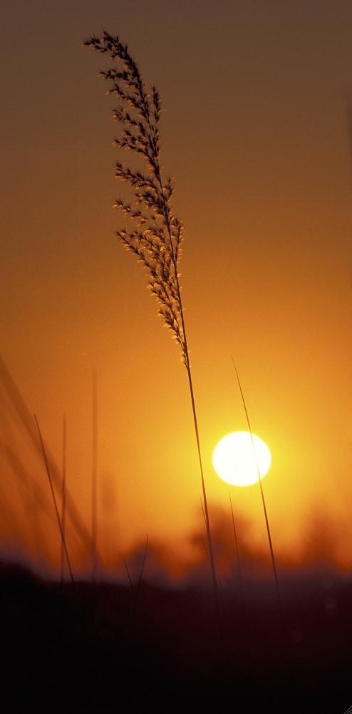BOTSWANA: Sunrise at Xakanaxa, on the Okavango Delta. Pietro Cenini / Panos