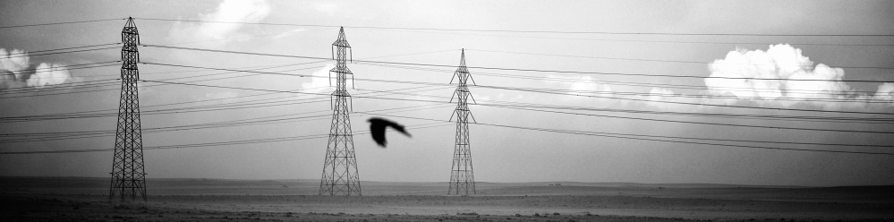 LIBYA: A crow flies above the road to Benghazi