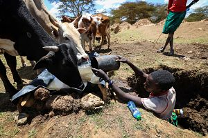A herder collects water for his cattle in Laikipia County. Pic: Xinhua/SIPA USA/PA Images