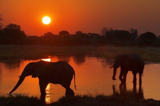 Moremi Game Reserve, Botswana. Pic: Sergi Reboredo/DPA/PA Images