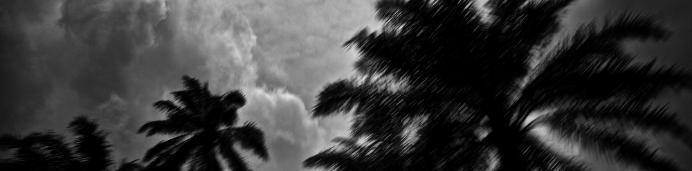 NIGERIA: Palm trees silhouetted against a cloudy sky. Robin Hammond / Panos