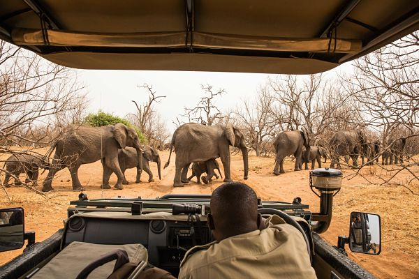 Elephants at Chobe National Park. Pic: Janelle / stock.adobe.com